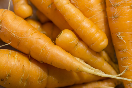 Harvest of carrots.