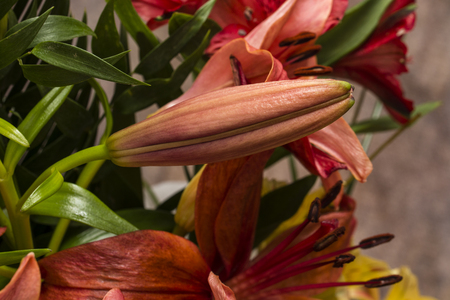 Orange lily flower closed. Banco de Imagens - 94356798