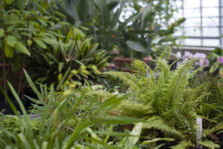 Green leaves of a fern. Banco de Imagens - 96729962