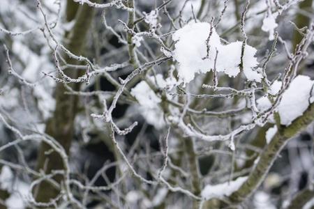 Snow with ice on plum branches. Imagens - 96769846