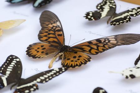 Illustration of butterflies under glass.