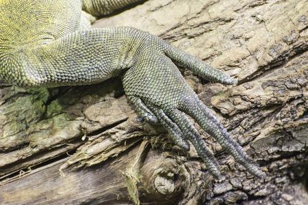 Green lizard rear leg.