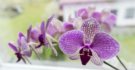 White flowers with purple orchid brindle. Imagens - 99003360