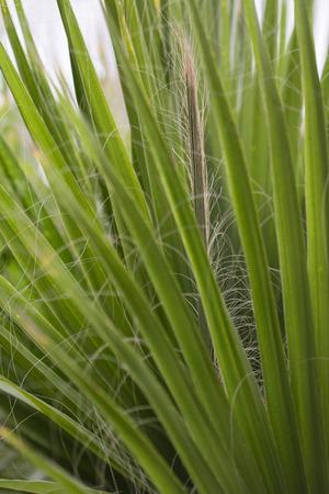 Green palm leaf leaves. Imagens