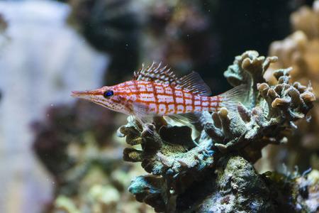 Aquarium sea fish. Imagens
