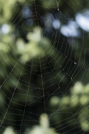 Spider in the wild.