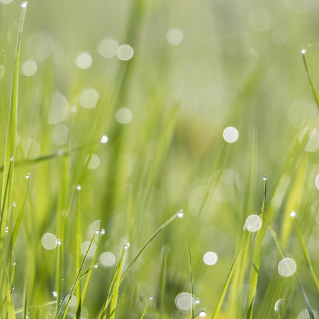 Dew drops on the grass. Imagens