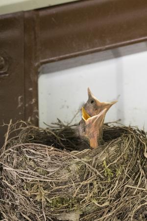A young boy in a nest. Banco de Imagens