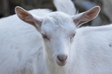 Head white knit. Imagens