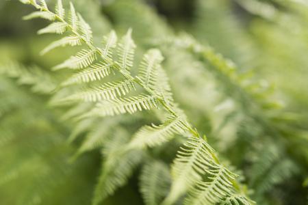 A leaf of a fern in detail.