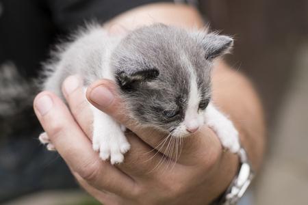 Fleked kitten in a man's palm. Banco de Imagens