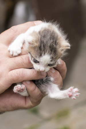 Fleked kitten in a man's palm. Stok Fotoğraf