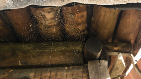 Spider web without the spider. Banco de Imagens