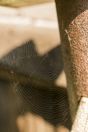Spider web without the spider. Imagens