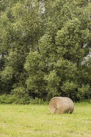 Cylindrical straw bales in a meadow with a forest in the background. Stockfoto