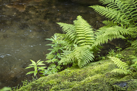 Green fern and water in the background.
