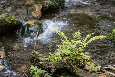 Green fern and water in the background. Banco de Imagens - 105932438