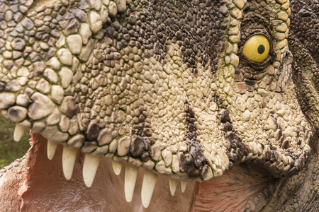 Close-up of a carnivorous dinosaur with an eye.