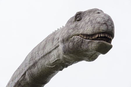 A plastic figurine with a detail on the head of a herbivorous dinosaur brontosaurus. Stock Photo