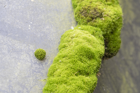 Green moss with spur gears.