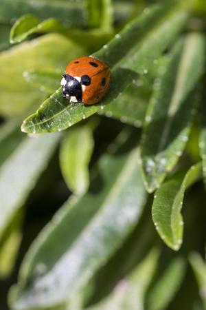 Ladybug sitting on a leaf.