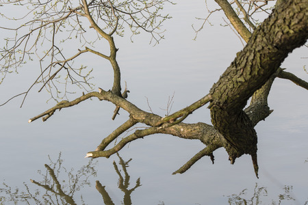 Tree branch over the water surface.