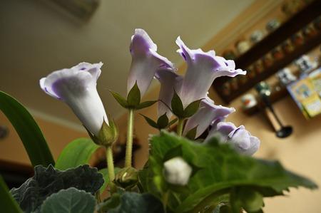 Fiori viola con ortensie bianche.