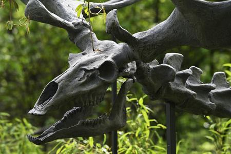 A plastic figure of a prehistoric deer skeleton.