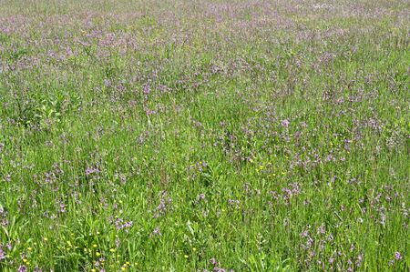 Flowers in tall grass on meadow.