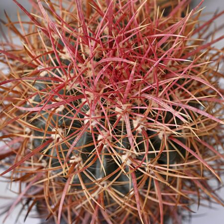 Close-up of cactus with spines.