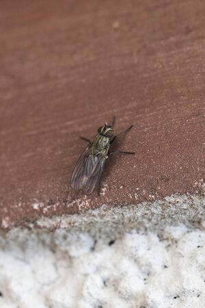 A fly sitting on a brown paint. Stok Fotoğraf