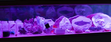 Violet-lit showcase with minerals and fossils.