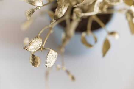 Shiny Leaves of Golden Mistletoe and Blue Bright Flower Pot.