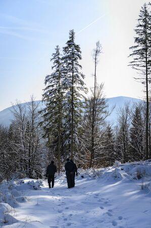 Hiker walking on snowy path in forest.