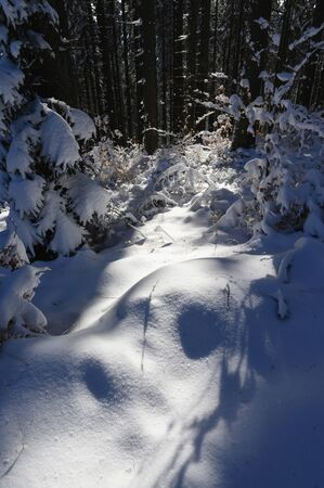 Snow Drifts in the Forest with Dark Background. 版權商用圖片