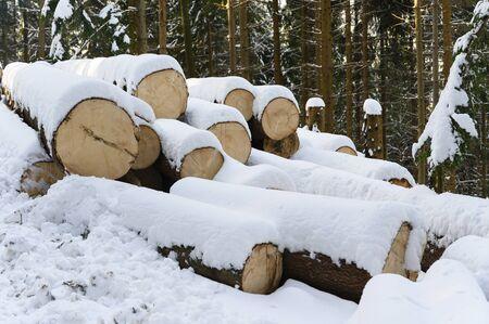 Spruce logs lying in snowy forest in winter. 写真素材