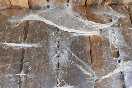 Old spider web on wood outdoors. |