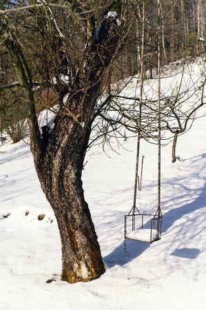 Metal swing near apple tree trunk in winter.