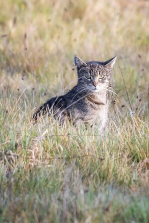 Tabby cat outside in the meadow. 스톡 콘텐츠