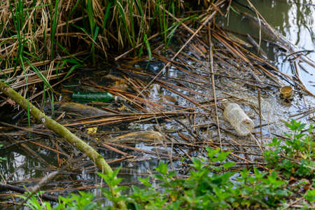 Floating bottles and tack in the reeds on the water surface of the lake. 스톡 콘텐츠