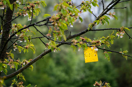 Yellow paw of an insect on a tree.