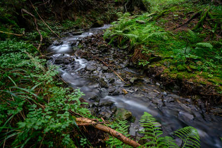 Flowing small river in the forest. Archivio Fotografico