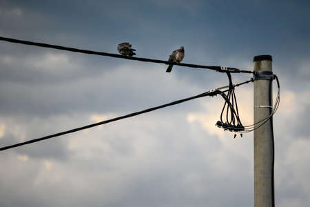 Two doves sitting on a cable wire by a concrete pole. Standard-Bild