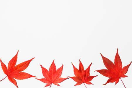Four red maple leaves on a white background.