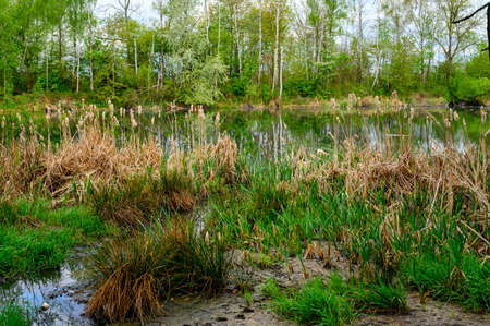 Reed by a deserted lake. Imagens