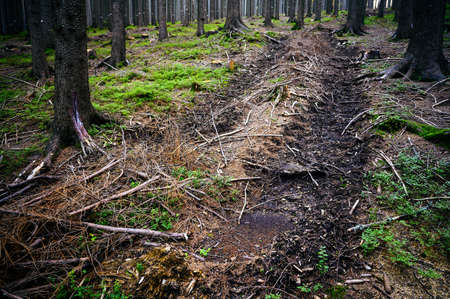 Tracked tracks after logging equipment in the forest. Imagens