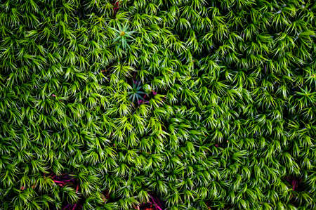 Lush green moss in the forest.