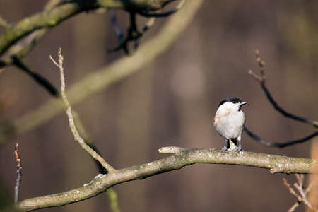 Great tit on a tree branch. Imagens