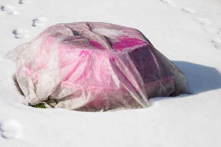 Sail covering a pink clam with sand in winter.