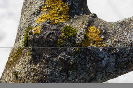 Moss growing on a tree trunk outdoors. Banco de Imagens